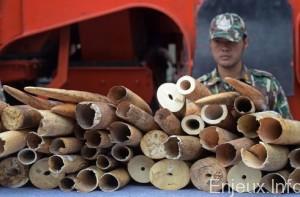 bangkok-saisie-ivoire-contrebande