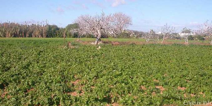 Tunisie/FIDA : Une action en faveur de l'agropastoral