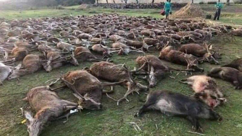 Le Portugal choqué après une partie de chasse où plus de 500 animaux ont été tués