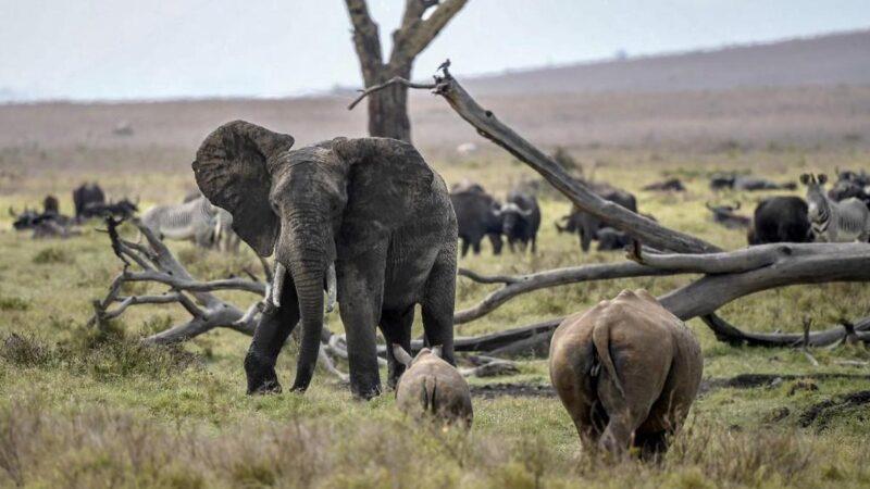 Kenya: recensement national de la faune sauvage